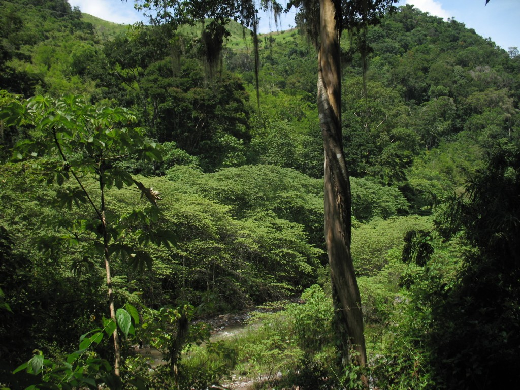 Fun Geography for Kids on Honduras - Image of the Honduras Rainforest
