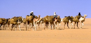 Fun Geography for Kids on Timbuktu - Image of a Salt Caravan in Timbuktu