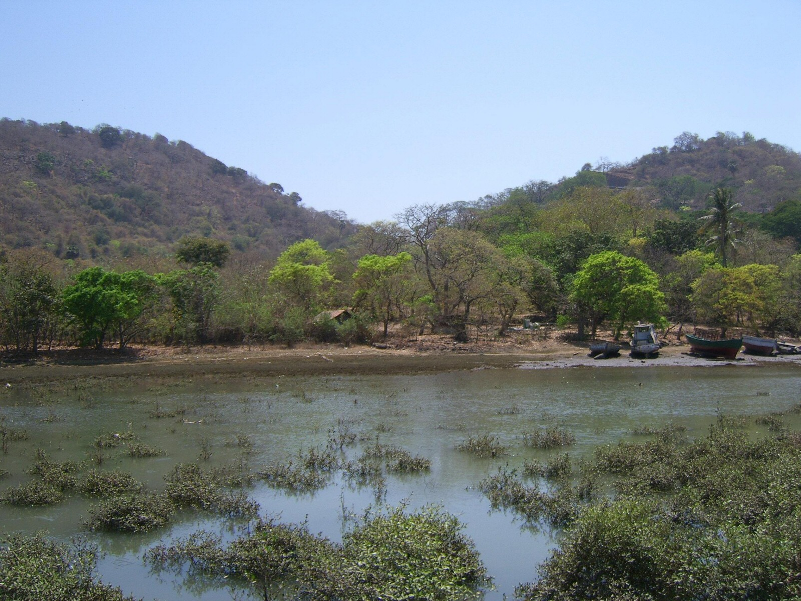 Fun Science Facts for Kids on Elephanta Island - Image of the Elephanta Trees