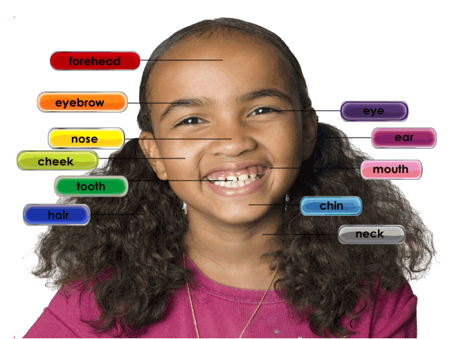 Fun Head Part of the Body Quiz – FREE Science Kids Quiz Games