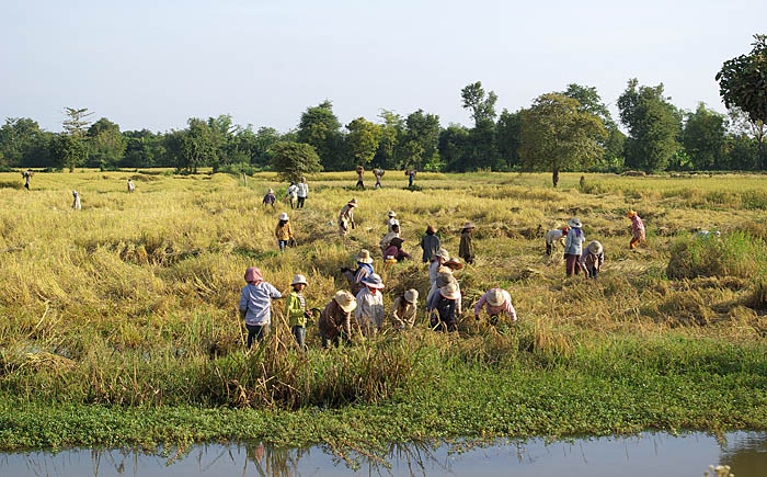 Kids Science Fun Facts on Cambodia - Image of Working Farmers in Cambodia - Cambodia Worksheet
