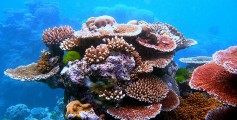 Kids Science Fun Facts on the Great Barrier Reef - a Variety of Corals Found in the Great Barrier Reef