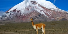 Simple Science for Kids on Ecuador - Image of the Vicuña Mountain in Chimborazo Ecuador