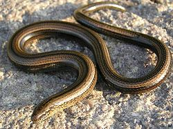 Fun Slow Worms Quiz – FREE Interactive Science Quiz for Kids