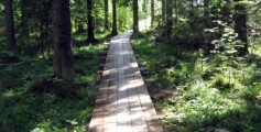 All about Finland Easy Science for Kids - Forest in Finland image