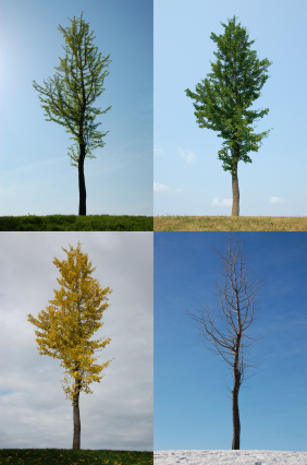 All about the Four Seasons Fun Facts for Kids - Image of a Tree During the Four Seasons - Four Seasons Quiz - Four Seasons Worksheet