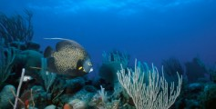 Easy Earth Science for Kids All About the Great Barrier Reef - Fishes Living on the Great Barrier Reef