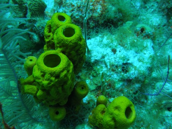 Easy Science for Kids Porifera or Sea Sponge Facts - Image of a Yellow ...
