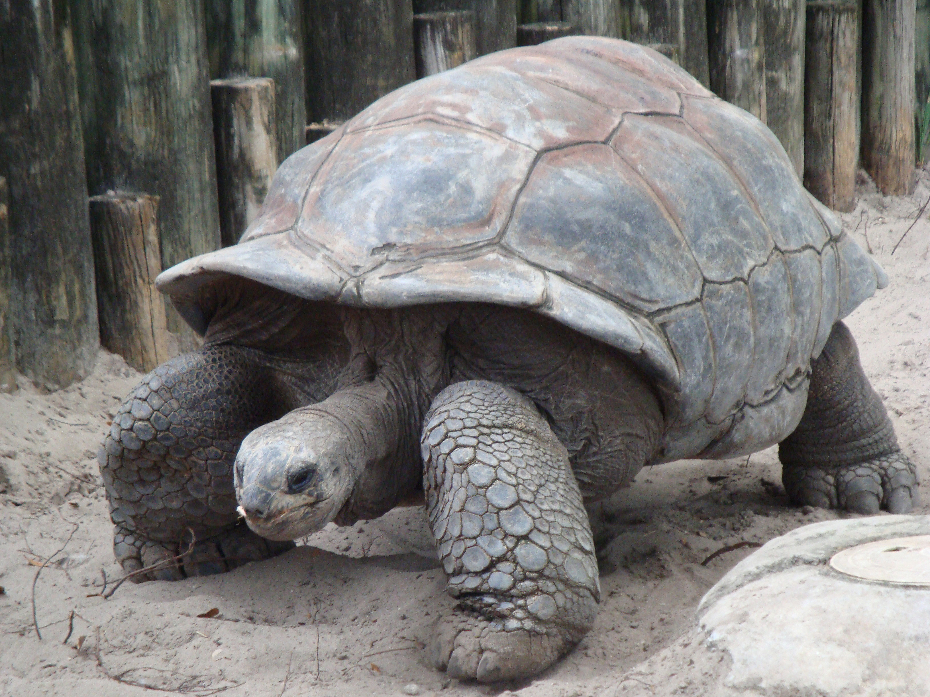 Fun Facts for Kids All About How the Tortoise Got Its Shell - Image of a Tortoise - How the Tortoise Got Its Shell Quiz - How the Tortoise Got its Shell Worksheet