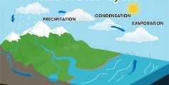 Kids Science Fun Facts All about the Water Cycle - Diagram of the Water Cycle image