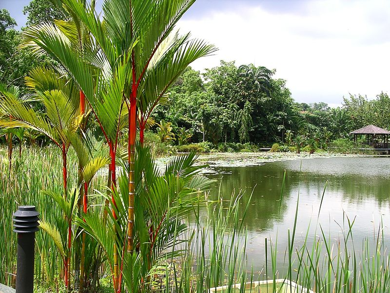 Simple Science for Kids on Singapore - Image of the Botanic Gardens in Singapore