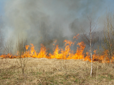 Simple Science for Kids Wildfires Quiz - Image of Burning Grass