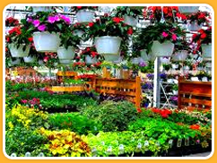 Plants for Kids Image