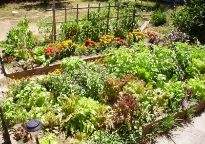 Fun Facts for Kids on Ecosystems - a Vegetable Garden an Example of a Man-Made Ecosystem